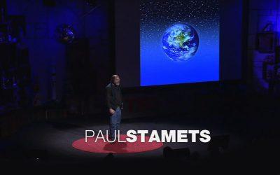 Neues Video: Paul Stamets über 6 Wege mit denen Pilze die Welt retten können