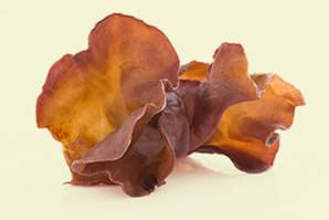 Auricularia auricularia-judae, Judasohr, Mu-Err